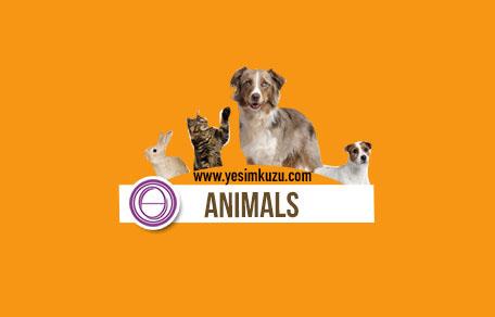 Hayvanlar eğitiminin logosu