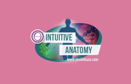 Sezgisel Anatomi eğitiminin logosu